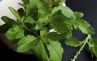 panch tulsi benefits